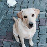 Animais no condomínio e os requisitos básicos para uma boa convivência