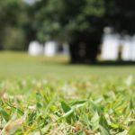 Manutenção de área verde na primavera